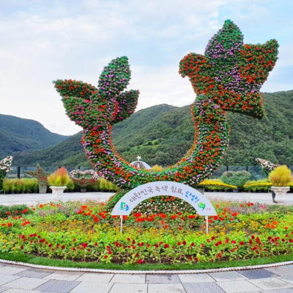 2020 단양가을꽃축제